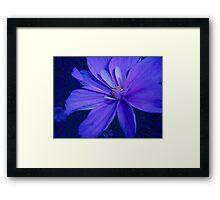 Flower Blues Framed Print