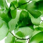 Maidenhair on white 2 by Marsha Tudor