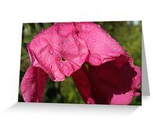 Wilting Rose Greeting Card