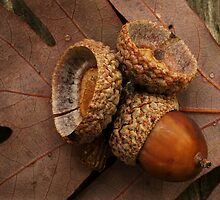 Acorns Fell by Richard G Witham