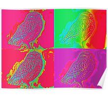 Owl - Multi-coloured Poster