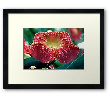 Abstract Red Morning Glory With Water Drops Framed Print