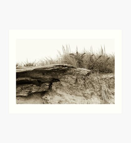 Jettis Driftwood Art Print