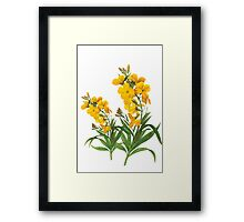Vintage yellow flowers botanical illustration by P.J. Redoute. Framed Print