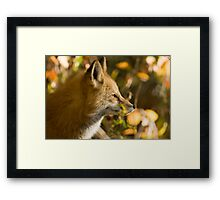 Red Fox Profile Framed Print