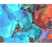 Complementary Blooms Photographic Print