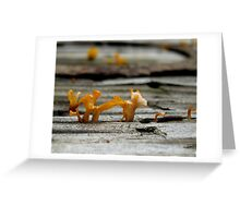 Fungi. Greeting Card