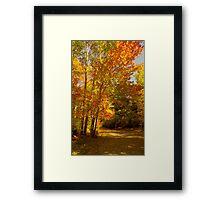 Take A Stroll Framed Print