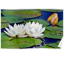 Fragrant Water Lily IV Poster
