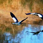MIRROR REFLECTION OF THE EGYPTION GEESE by Magaret Meintjes