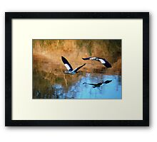 MIRROR REFLECTION OF THE EGYPTION GEESE Framed Print