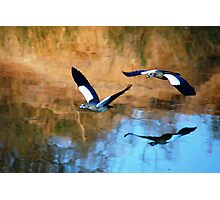 MIRROR REFLECTION OF THE EGYPTION GEESE Photographic Print