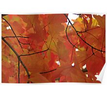 Autumn Leaves On The Tree Poster