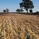After The Harvest by Mark Bateman