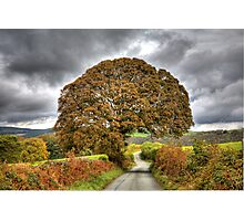 Tree Arch Photographic Print