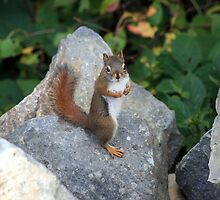 A Squirrel by HALIFAXPHOTO