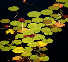 Lily pads on black by Jeannette Sheehy