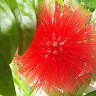 Flower Close-Up, Ford Foundation, Indoor Garden, New York City by lenspiro