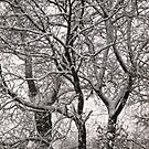 Trees in a blizzard by Shulie1