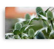 COOL PLANT Canvas Print