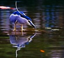 Black-Crowned Night-Heron by William Lee