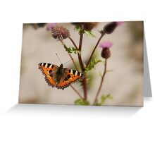 BUTTERFLY ON THISTLE 1 Greeting Card