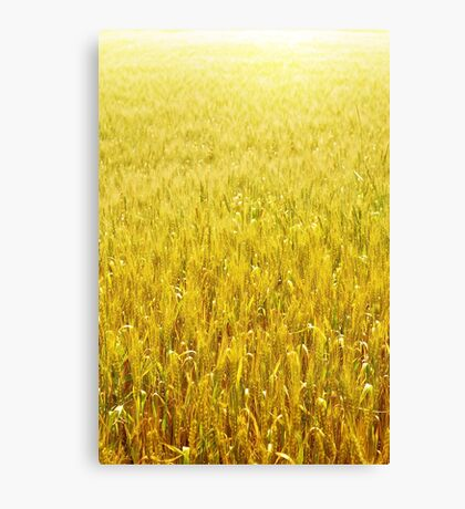 Golden wheat field Canvas Print