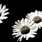 Cliché Black and White by Trenton Purdy