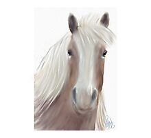 Horse with no Name  Photographic Print