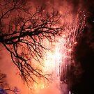 Fireworks by Elaine Li