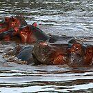 Happy Hippo's in Africa by Maureen Clark