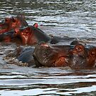 Happy Hippo's in Africa by maureenclark