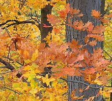 Autumn Splendour II by Al Bourassa
