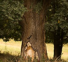 Tree trunk Angusvale by daveoh