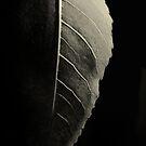 Dark Side of the Moon by Nikki Trexel