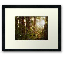 Otway # 2 Framed Print