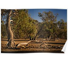 Well Fence and Red Gums Poster