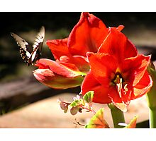 My first Butterfly Photographic Print