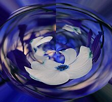 Dogwood in Blue by Judy Vincent