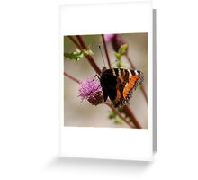 BUTTERFLY ON THISTLE 3 Greeting Card
