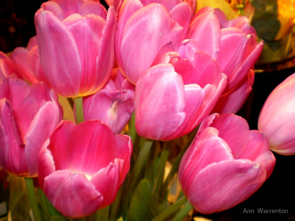 Talula Tulips by Ann  Warrenton