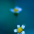 Blue.  by Sherstin Schwartz