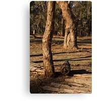Barmah State Forest Red Gums Canvas Print