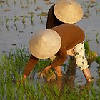 peoplescapes #97, planting rice by stickelsimages