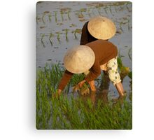 peoplescapes #97, planting rice Canvas Print