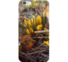 Early Spring Flowers iPhone Case/Skin