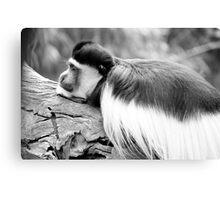 Monkey BW Canvas Print