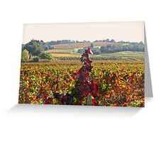 Vineyard in Automn Greeting Card