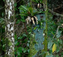 Rain Forest Trees by Michael Norris