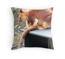 red tree kangaroo, at Currumbin Sanctuary (Australia) Throw Pillow
